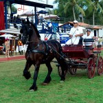 Carriage Rides at La Patrona